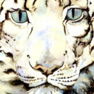 FP: The Snow Leopard